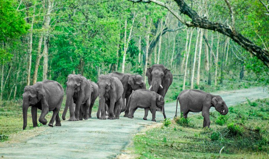 Bandipur National Park