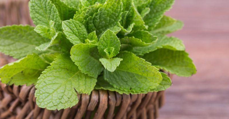 Mint Leaves For Skin Lightening