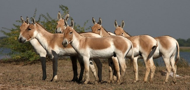 Rann of Kutch National Park