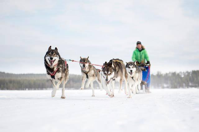 Dog-sledding in Alta