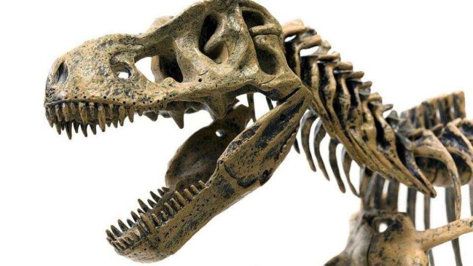 Dinosaur With 500 Teet