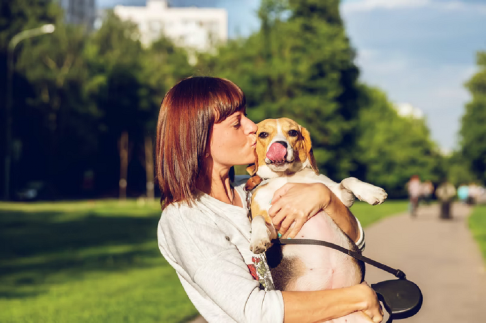 Finding Out Which Dog Breed Best Suit Your Lifestyle